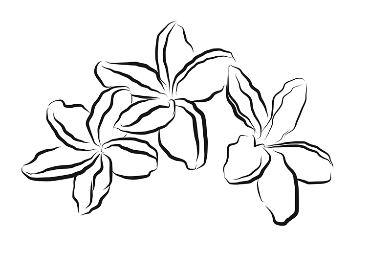 Sketching on the Go: Fluid Freehand Sketching with Adobe