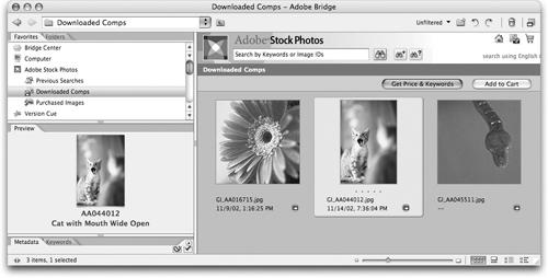 Accessing Adobe Stock Photos | Real World Adobe Creative