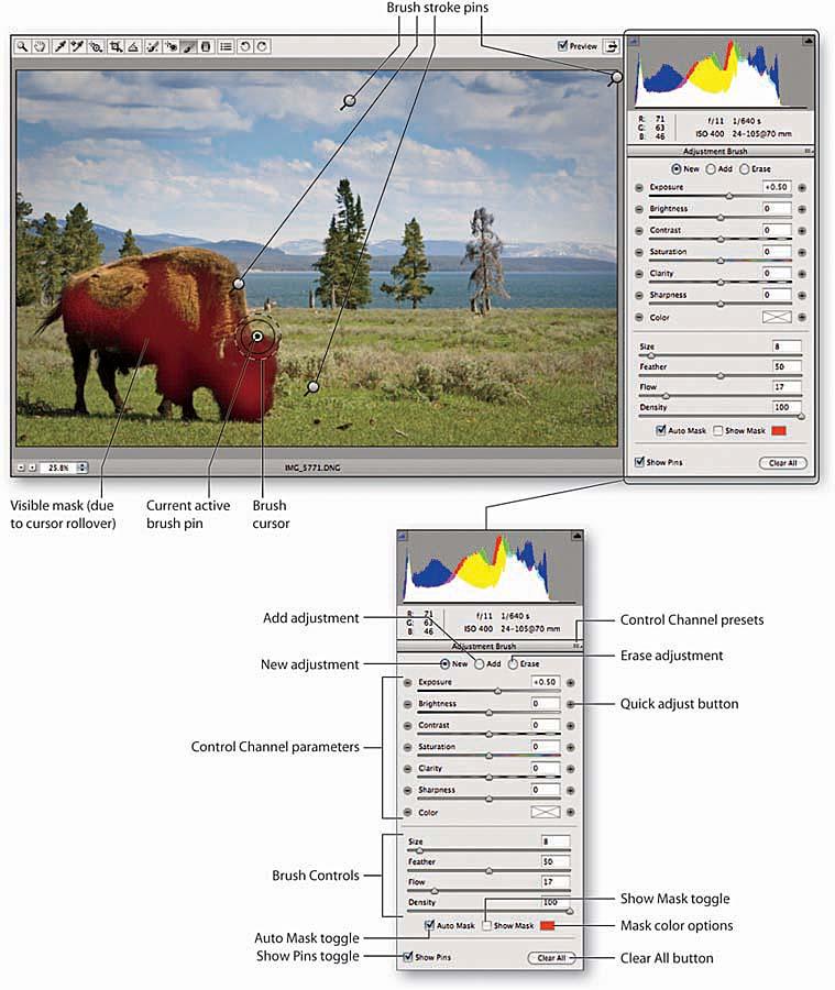 Adobe Camera Raw - Adjustment Brush